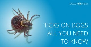 ticks on dogs