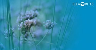 natural flea treatments & control