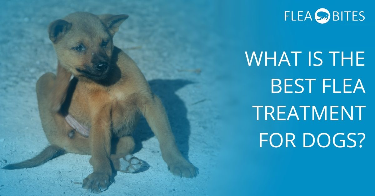 What is the best dog flea treatment?