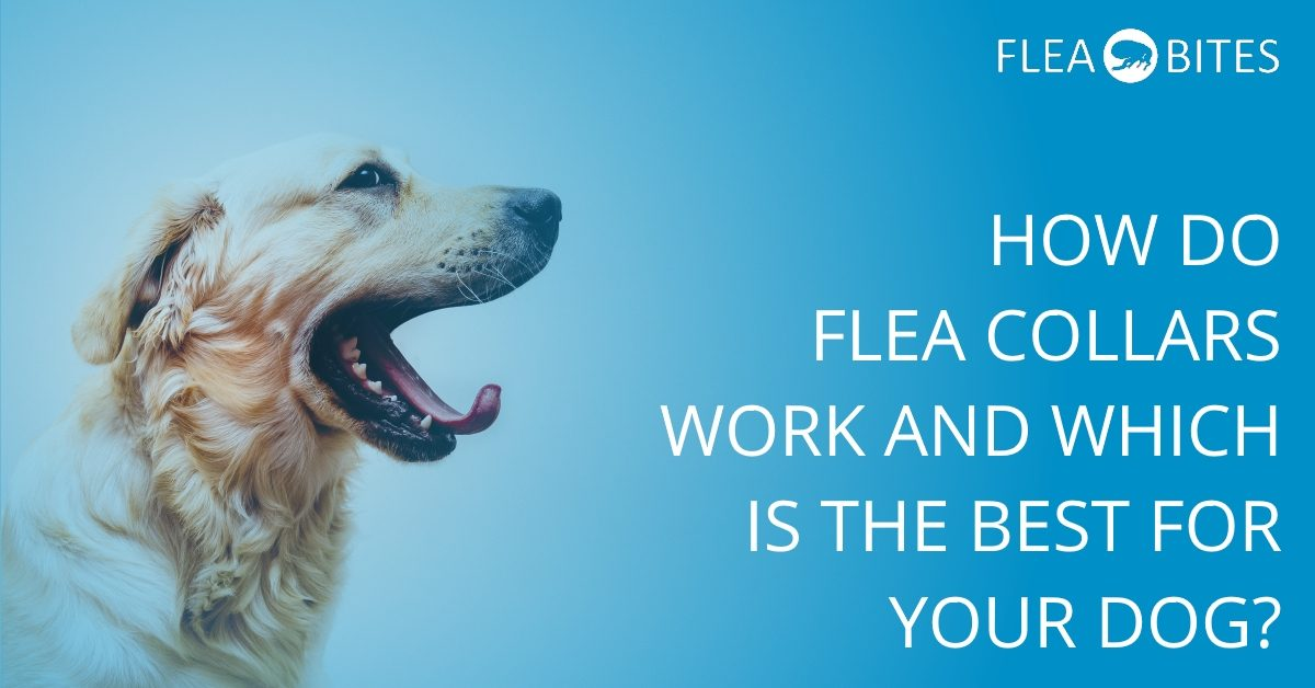 What is the best dog flea collar?