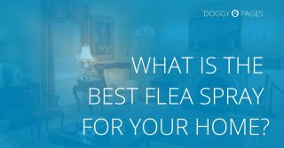best flea spray for the home