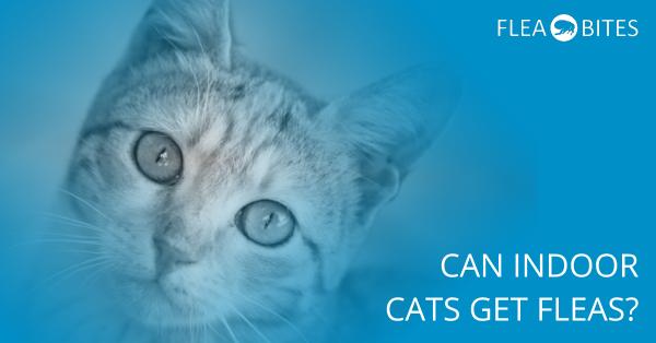 can indoor cats get fleas?